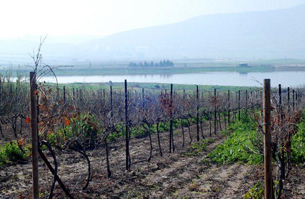 טעמים-בעמקים-יין